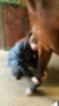Paardendierenarts Hilde Schillings