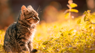 tabby-kitten-sitting-on-the-grass-669015