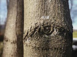 """Natural Art: """"Eye Wide Open"""""""
