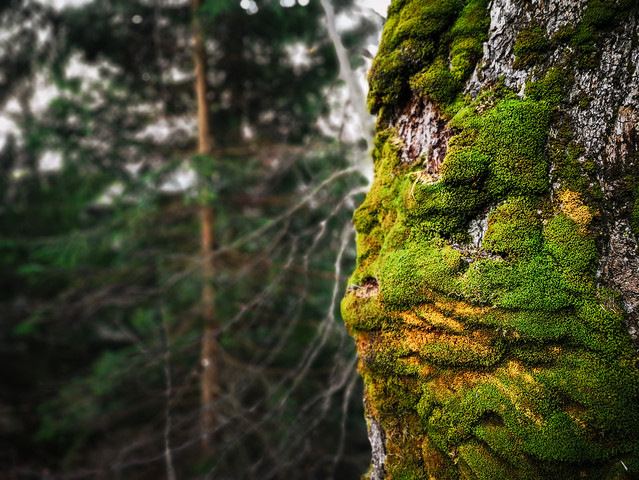 """Natural Art: """"Guardian Of The Forrest"""""""