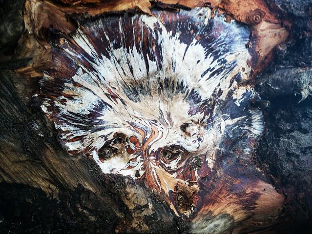 """Natural Art: """"Einstein On Acid"""""""