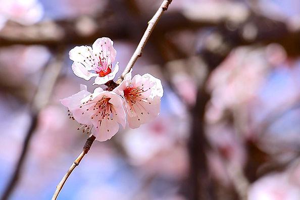 spring-1758343_1920.jpg