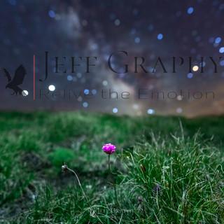 Armérie des Alpes sous les étoiles