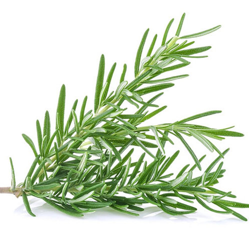 FRESH ROSEMARY                  1 BUNCH