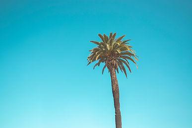 palm-tree-2662663.jpg