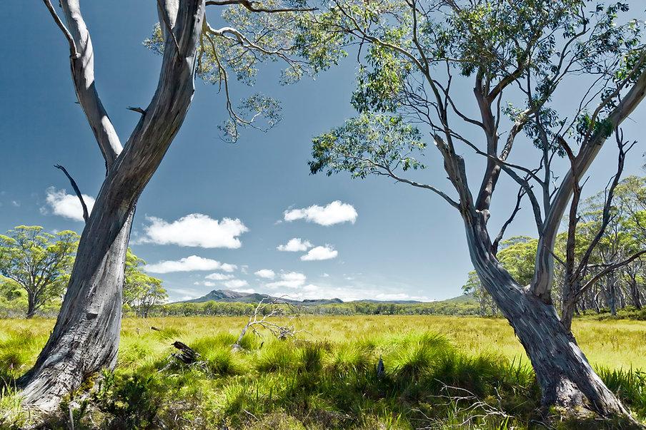 photodune-687512-tasmania-m.jpg