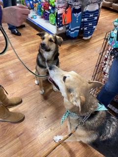 Ren's Pet Depot