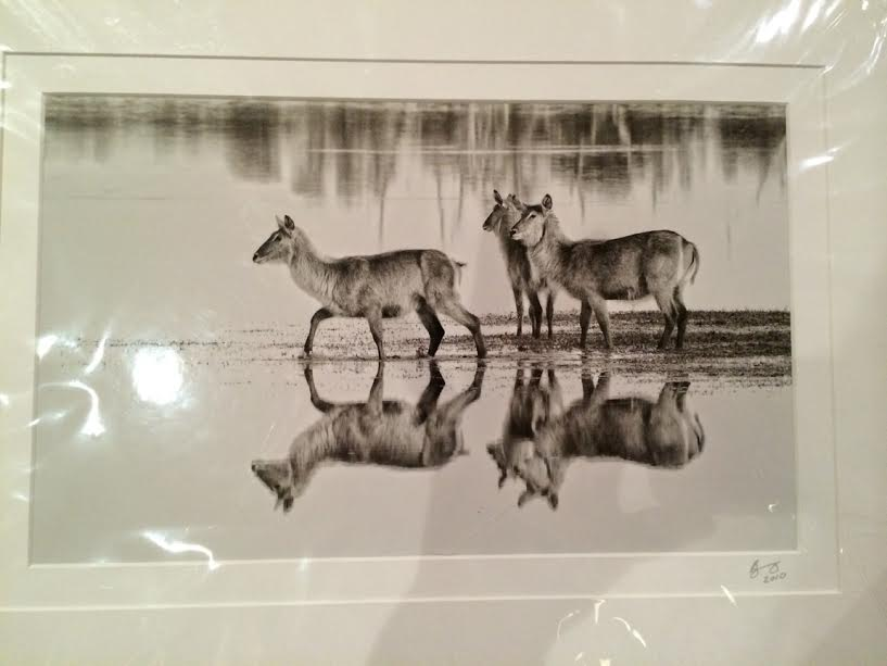 South African Photographer's work
