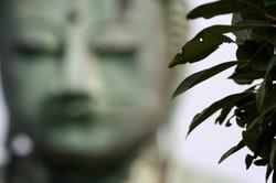 rack buddha
