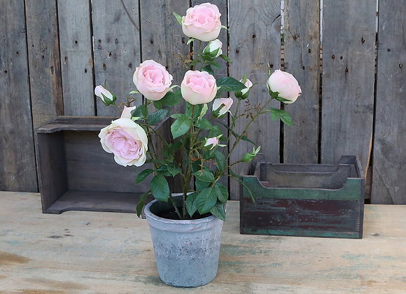 Rose i gl. keramik potte
