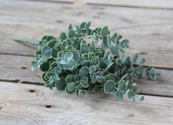 Eucalyptus plante