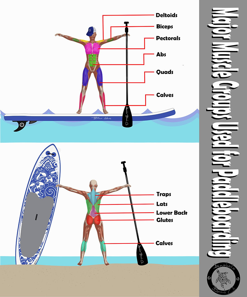 Muscles used for paddleboarding