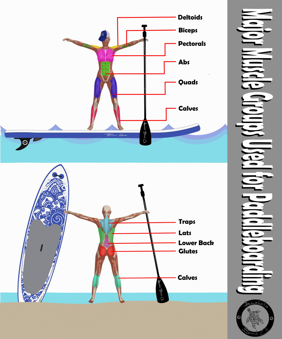 Muscle groups used for Paddleboarding