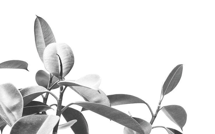 Plant_edited_edited_edited_edited.jpg