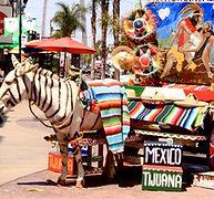 burro-tijuana.jpg