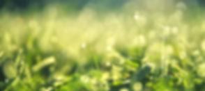 meadow-3743023_1920_edited.jpg