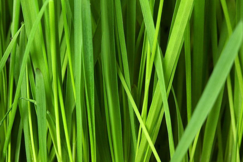 grass-16044_1920.jpg