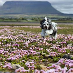 Dogmalion Dog Groomer