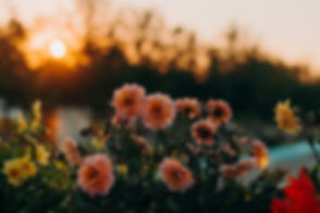 4k-wallpaper-beautiful-bloom-1408199_edi