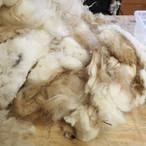 1 - Raw Wool