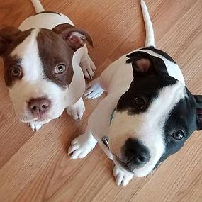 Raw fed puppies