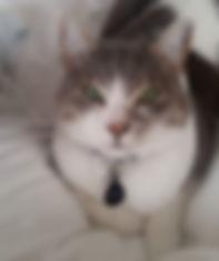 prey model raw fed cat