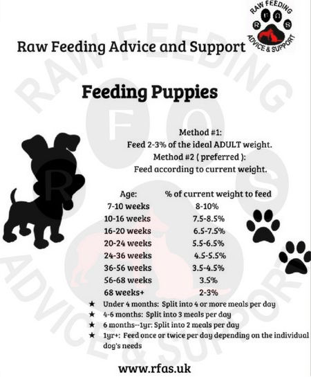 Puppy Starter Guide Raw Feeding Advice And Support