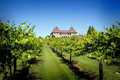 Winery Vineyard Vignette.jpg