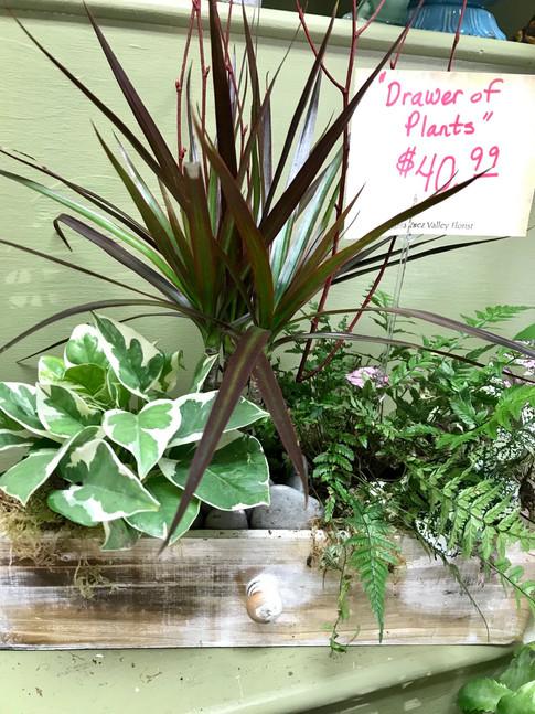 Drawer of Plants
