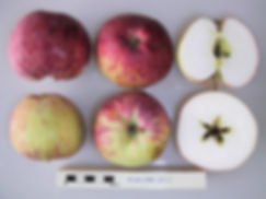 Atlas (National Fruit Collection)
