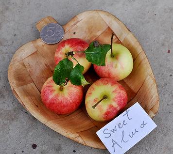 Alma Sweet сладкое яблочко радует детей