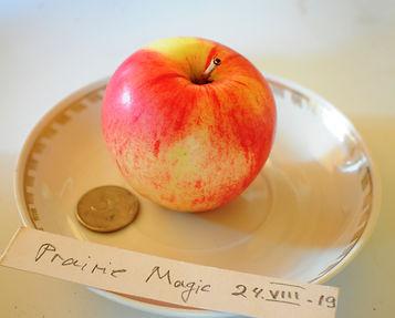 Магия Прерий - новый сорт для северного сада.