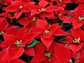Christmas Remembrances