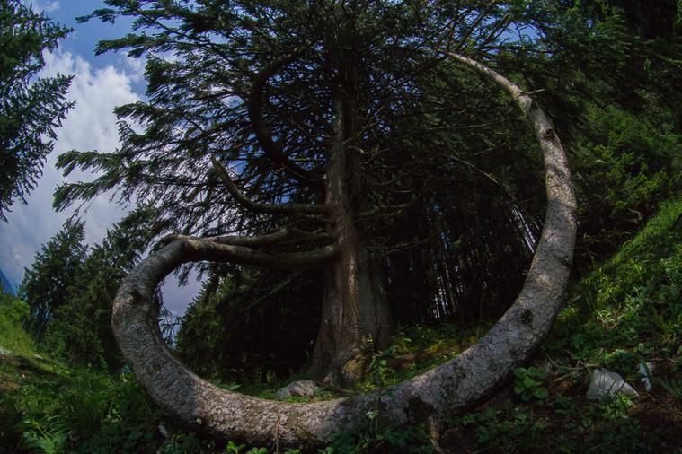Baum Wamberg