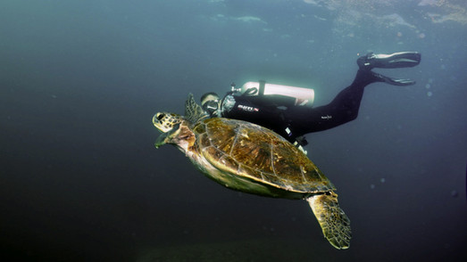 Our beautiful marine friends