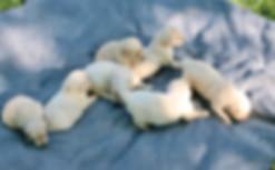 Sadie 2020 Pups 3.5 Weeks1.JPG