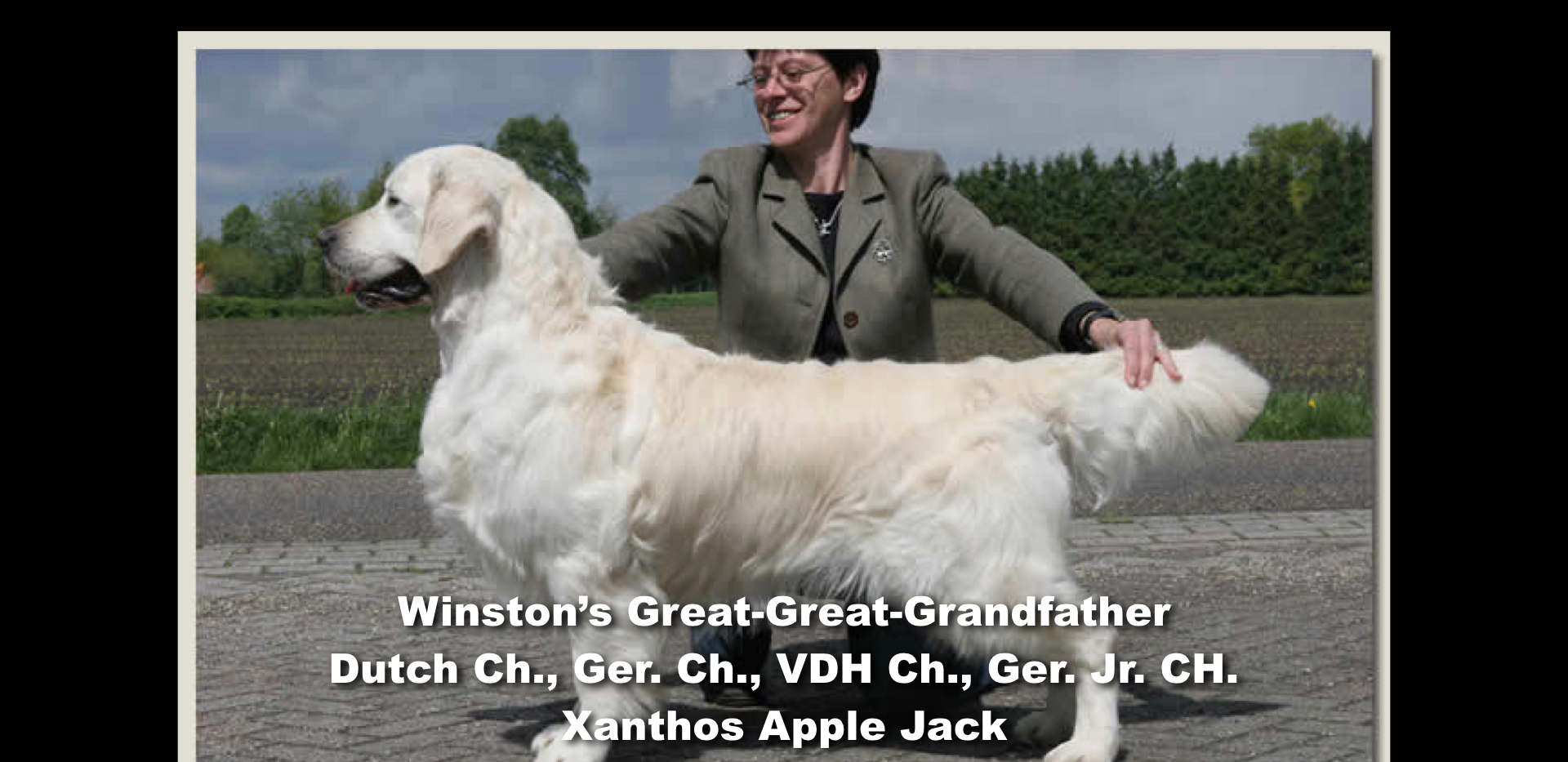 Winston-Pictoral Pedigree.009.jpeg