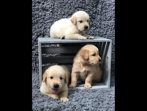 Puppies Summer 2018-Bella & Sadie's.012.