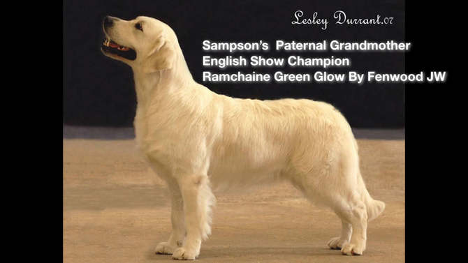 Sampson's Pedigree in Pics-Opt 2.006.jpe