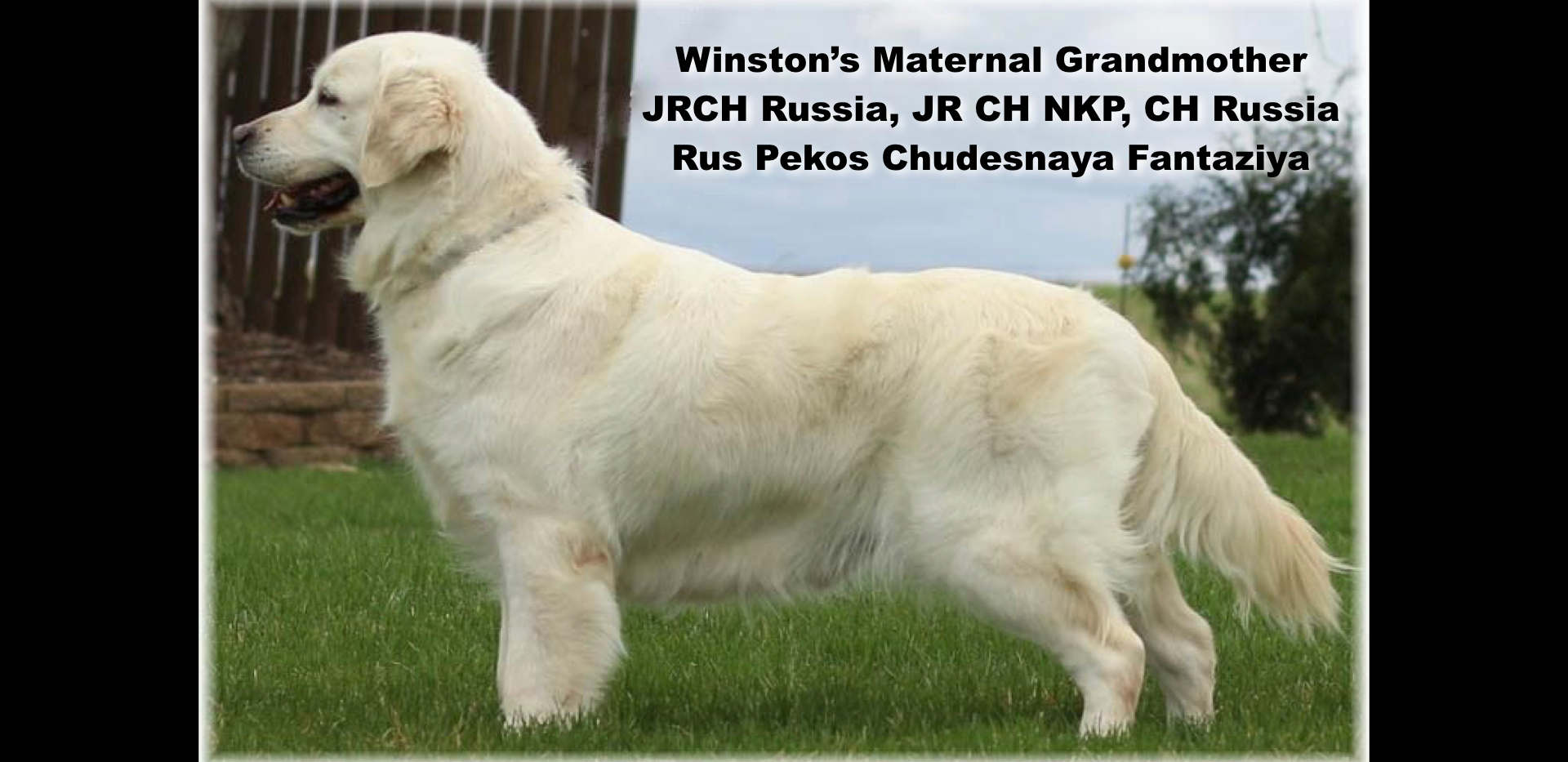 Winston-Pictoral Pedigree.004.jpeg