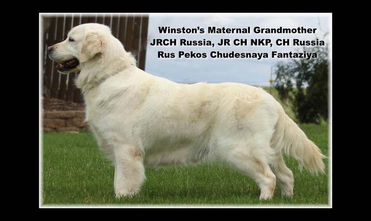 Winston-Pictoral Pedigree.004.jpeg