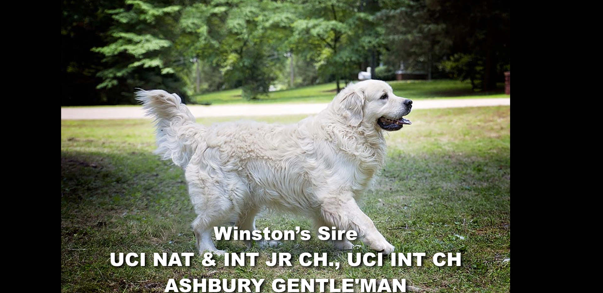 Winston-Pictoral Pedigree.002.jpeg