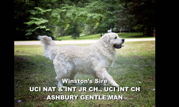 Winston-Pictoral Pedigree.002.jpeg