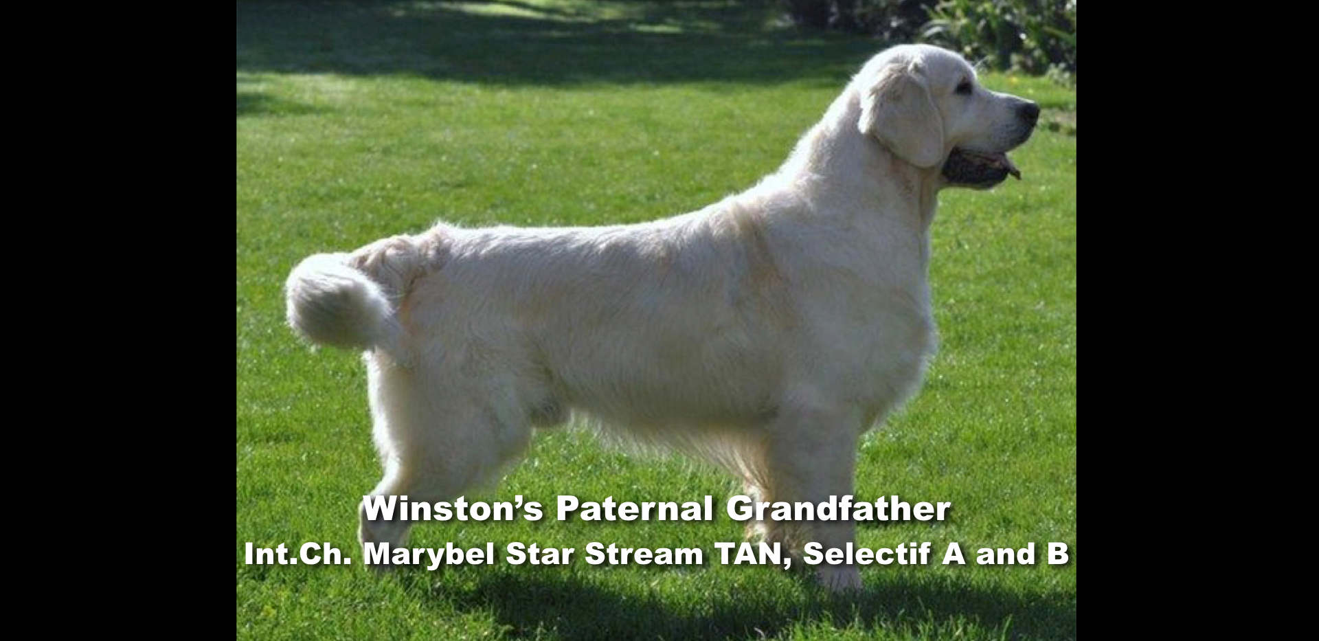 Winston-Pictoral Pedigree.005.jpeg