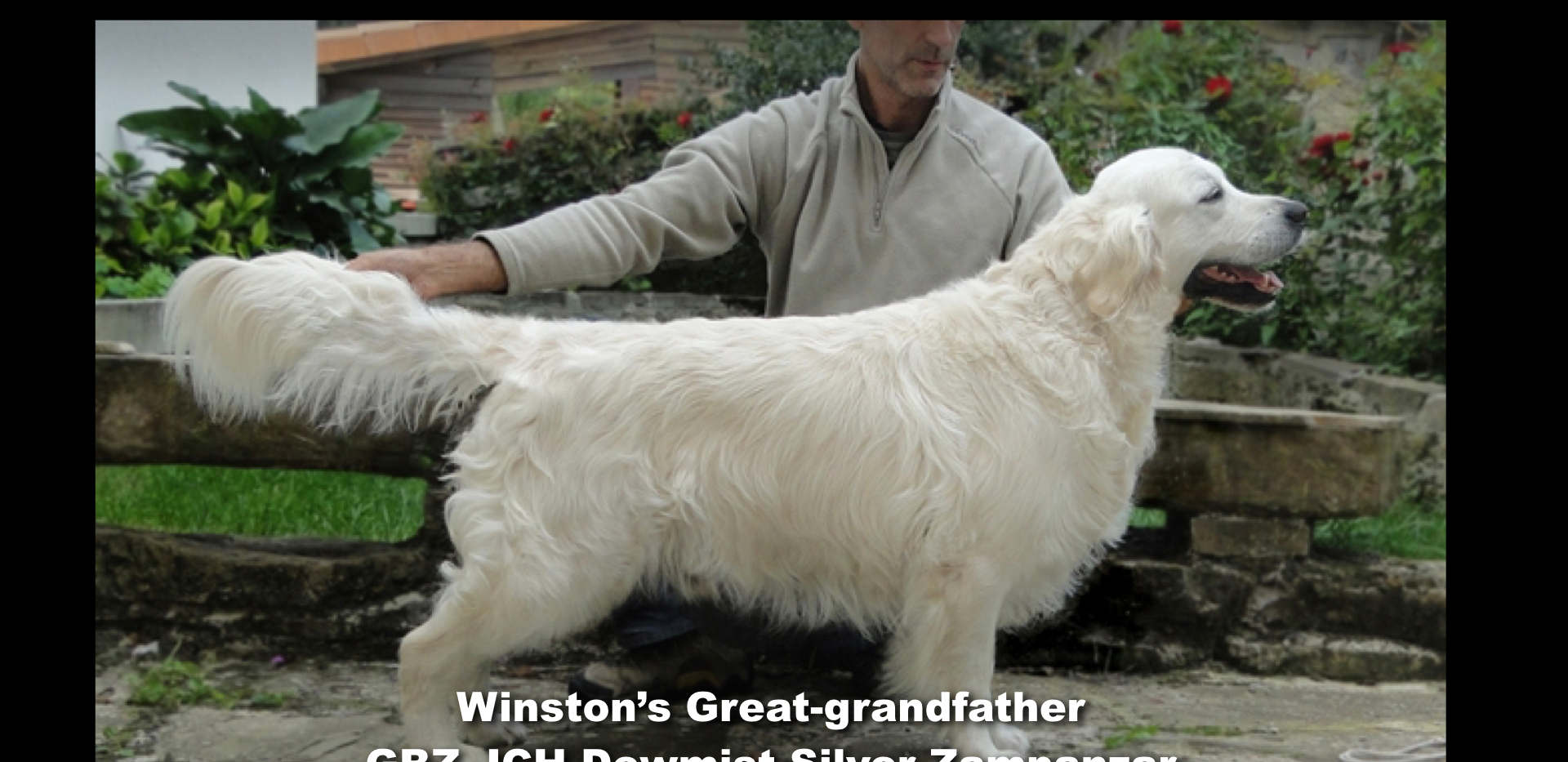 Winston-Pictoral Pedigree.012.jpeg
