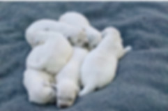 Ava pups 2020-2 Weeks.JPG
