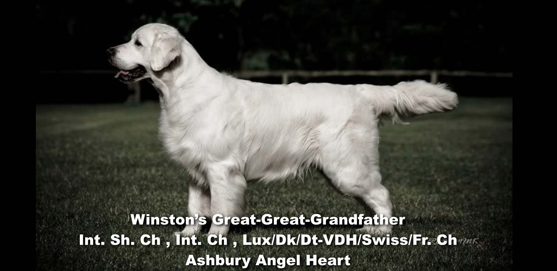 Winston-Pictoral Pedigree.007.jpeg