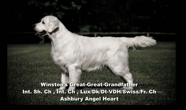 Winston-Pictoral Pedigree.007.jpeg