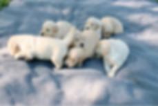 Sadie 2020 Pups 3.5 Weeks.JPG