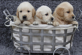 Puppies Summer 2018-Bella & Sadie's.015_